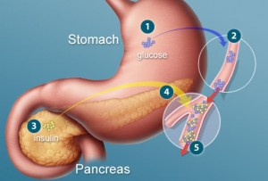 Insulin produced in the pancreas controls glucose levels in the bloodstream