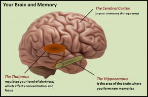 How memories are stored in the brain