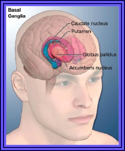 Diagram to show the area of the brain which causes Tourette's syndrome