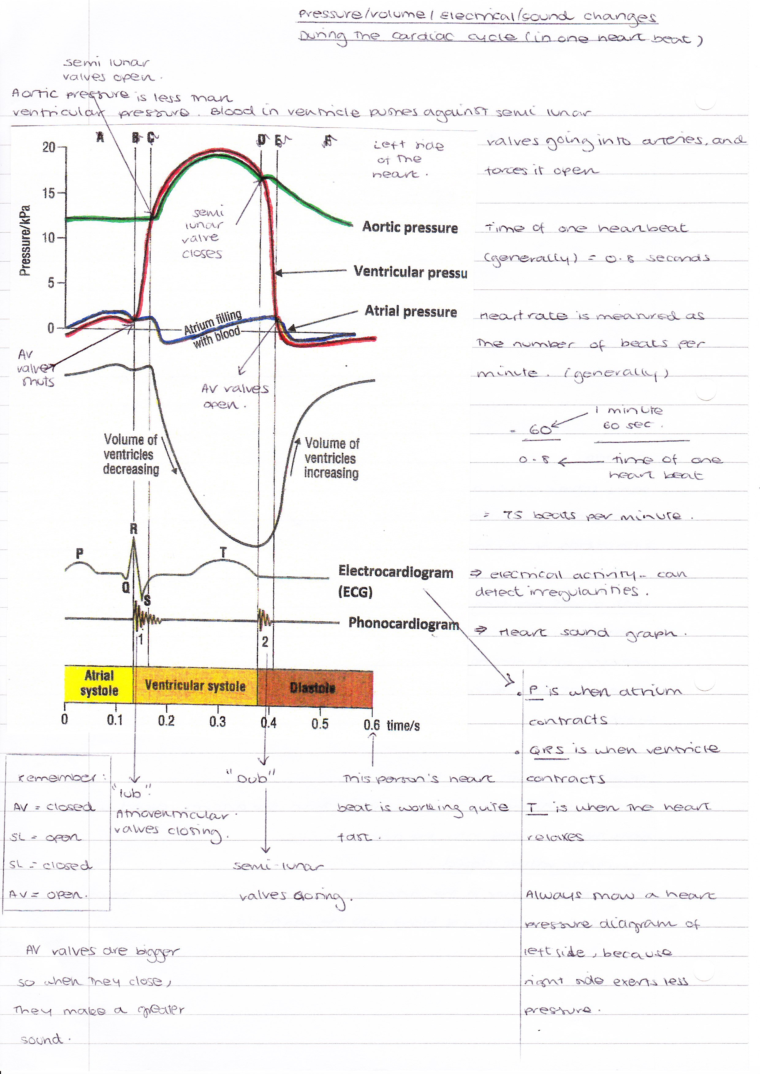 Cardiac cycle cont cressies student medical blog cardiac cycle cont pooptronica