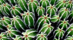 cacti-needles_3cc3cf1c0f513010