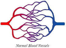 normal blood vessels