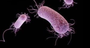 012816_cs_microbe-evol_free
