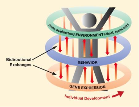 epigenesis psychology