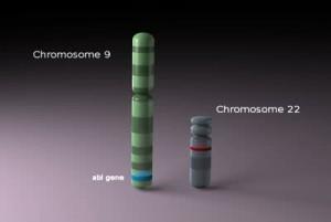chromosome9and22