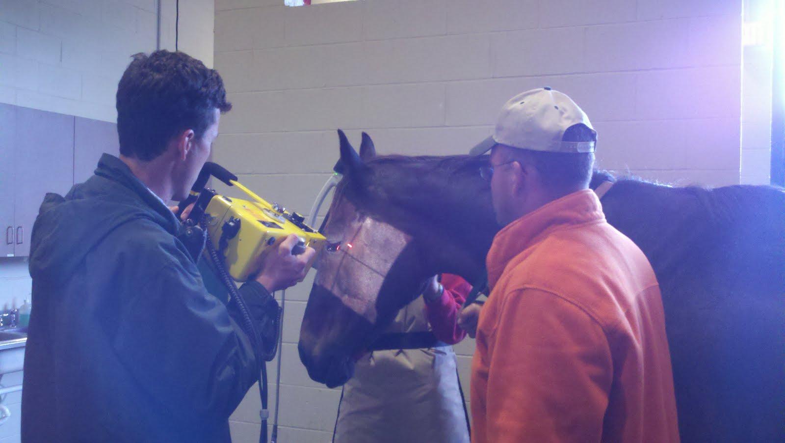 vet net nosebleed in horses vet