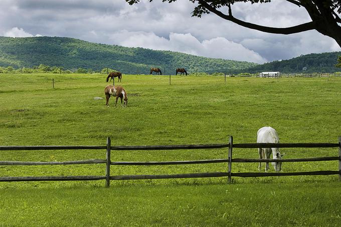 حصارکشی مرتع برای نگهداری اسب
