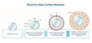 BioGlass_BioactiveGlassSurfaceReaction_WEB