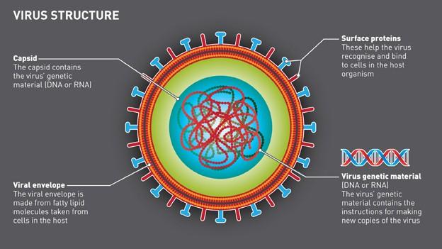diagram of the virus diagram of a virus cell