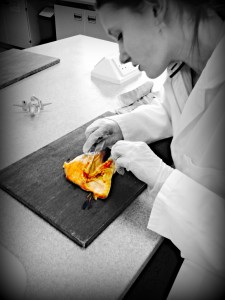 Doing the dissection